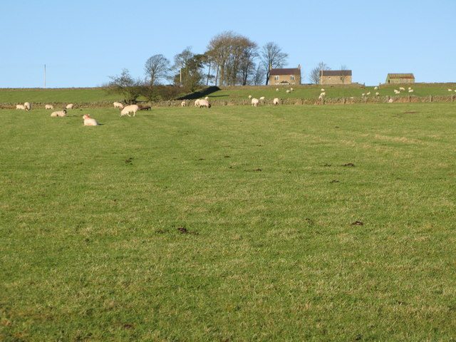 Pastures west of Catton (8)