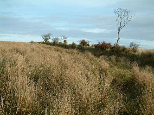 Moorland at Long Holcombe