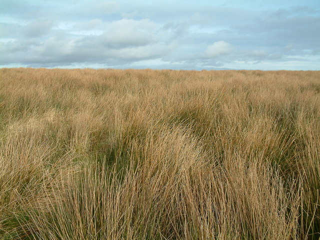 Moorland at Long Holcombe