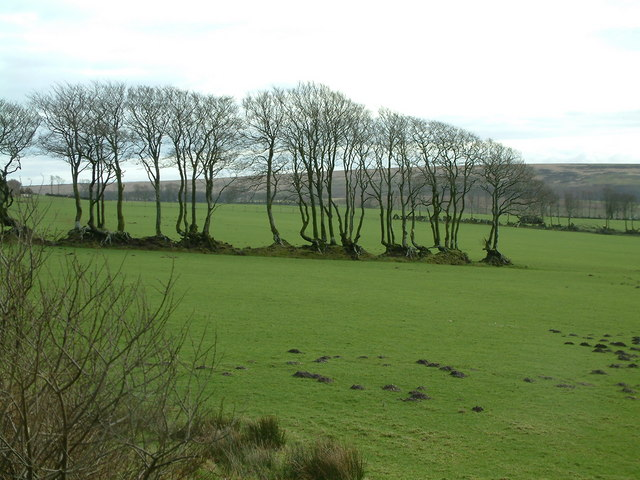 Grazing land with row of trees