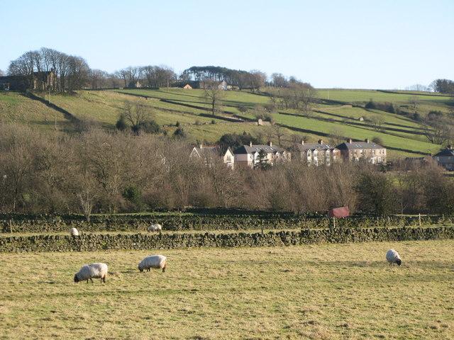 Sheep grazing near Catton (2)