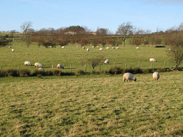Pastures west of Catton (9)