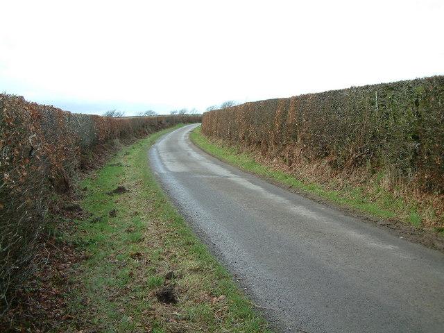 Beech hedges