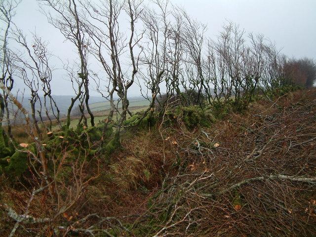 Hedge thinning