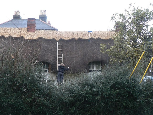 Wroxall: thatching in progress