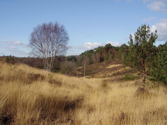 Castle Bottom Nature Reserve