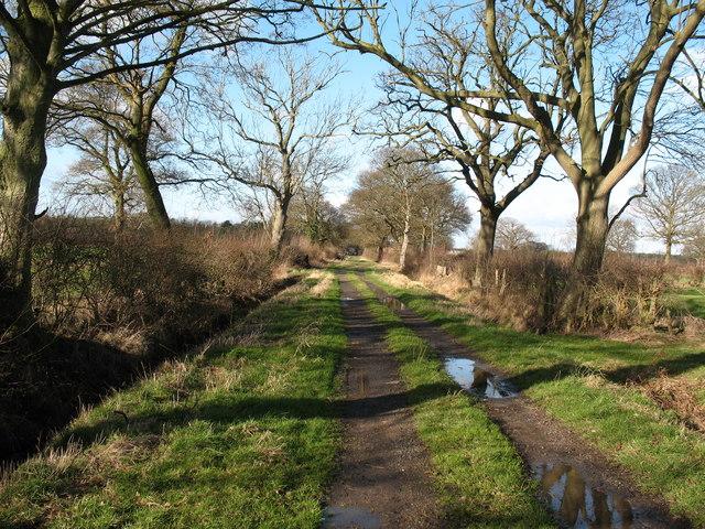Track across Helperby Moor