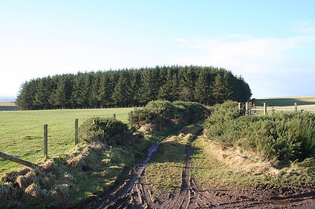 Lane and copse north of the Den of Muck