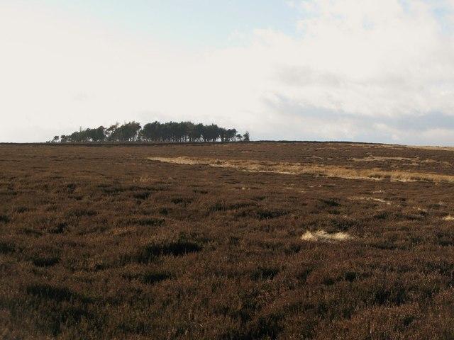 Moorland below Green Hill