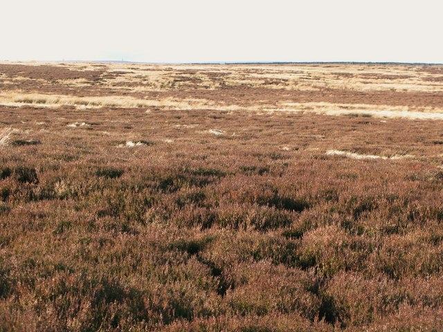 Moorland below Green Hill (2)
