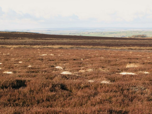 Moorland below Green Hill (3)