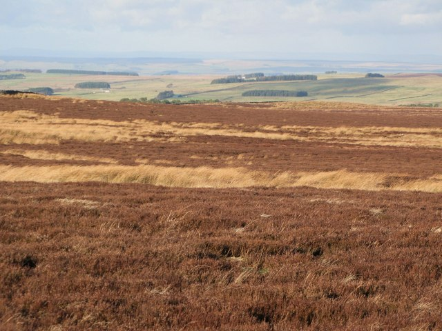 Moorland below Stobb Cross