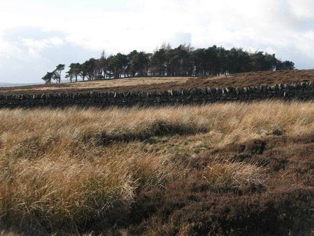 Plantation on Green Hill (3)