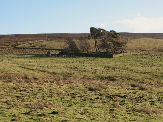 Ruin and small plantation above Newfold House