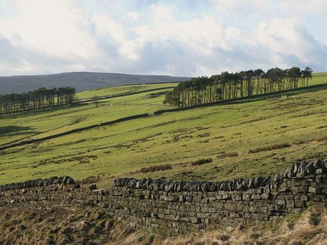 Pastures above East Garret's Hill Farm