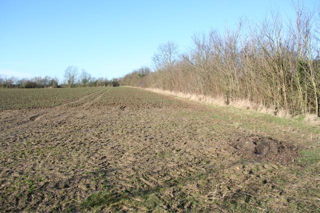 Field boundary west of Moat's Way Farm