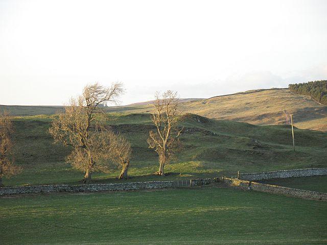 Dykes by the Fenwick Burn