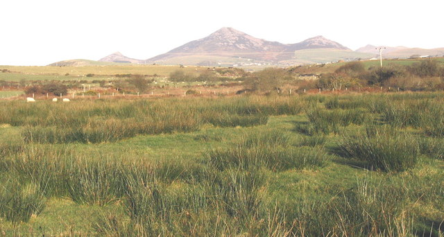 View NE across a riverine wetland between Castell Bach and Cerniog Isaf