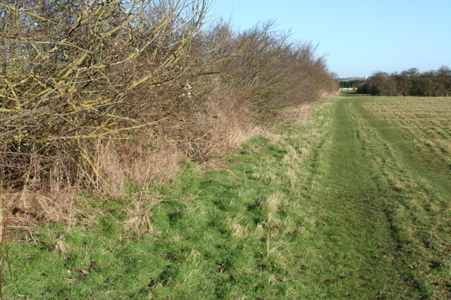Field boundary west of Moat's Way Farm