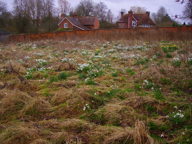 Barton Stacey - Snowdrops