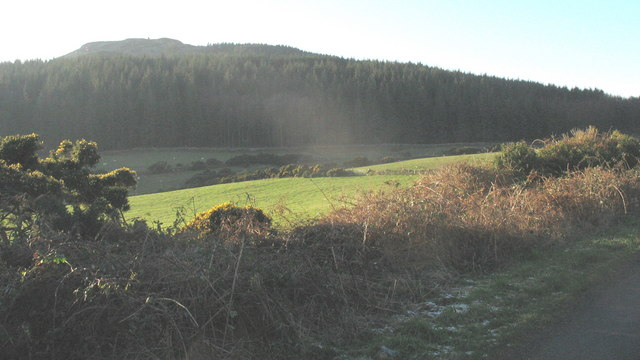 The forested slopes of Garn Boduan