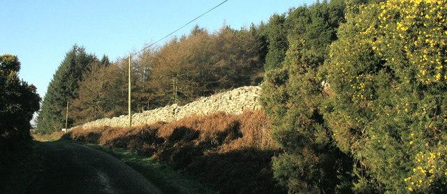 Mynydd Nefyn Forest