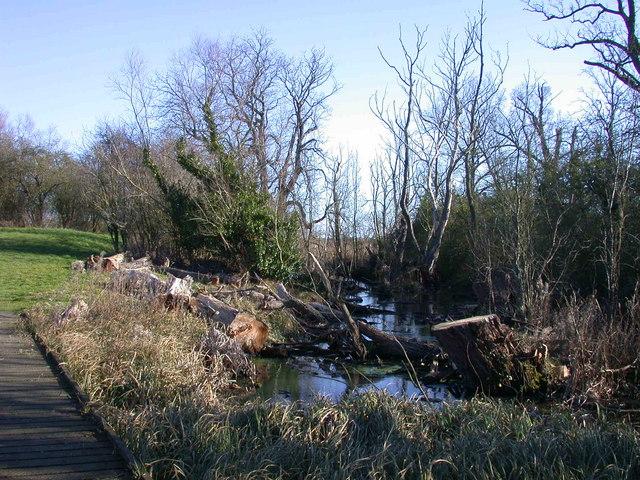 Felled trees at Giant's Hill