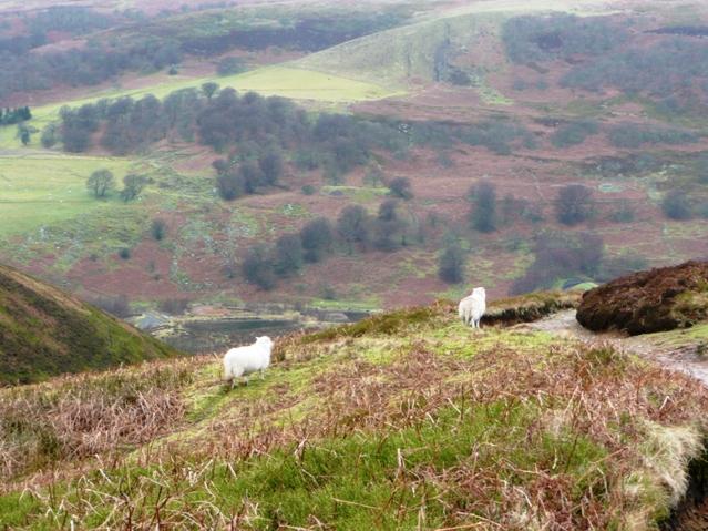 Descent into Cwm Tyleri