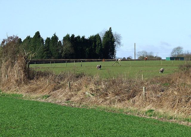 Grazing north of Smestow, Staffordshire