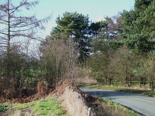 Lane by Enville Golf Course, Staffordshire
