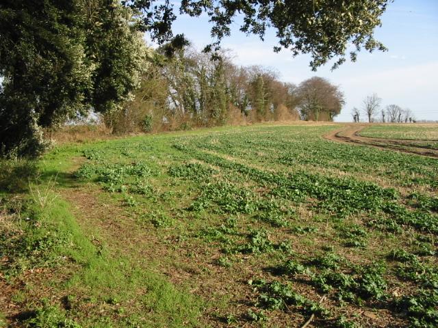 Field edge adjacent to Stoneheap Road