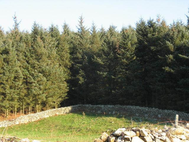 Field/woodland boundary near east of Tan-gwydd-dderwen