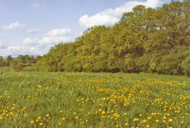 Buttercup Field, Trent Country Park, London, N14