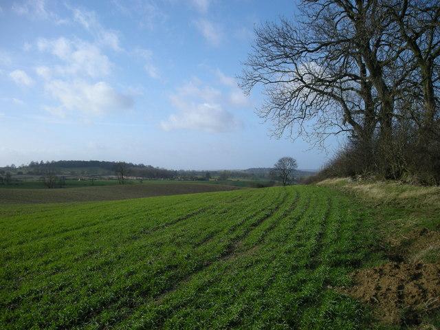 Flecknoe -Bush Hill