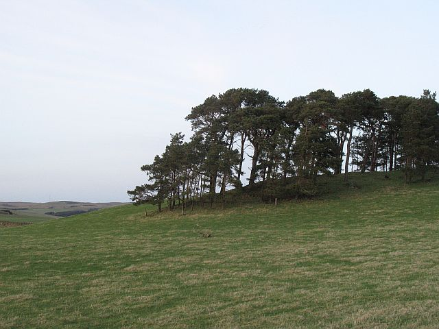 Wood on Crumhaugh Hill