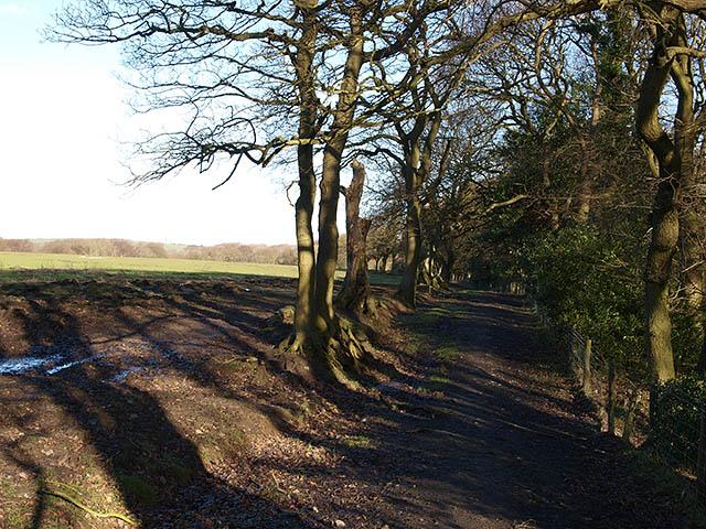 Bridleway at Cow Close