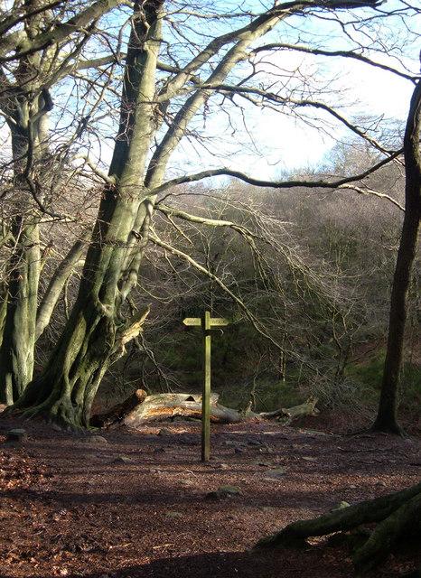 Forest Wood, Gradbach