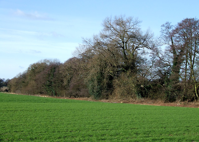 Farm Land by Spittle Brook, Staffordshire