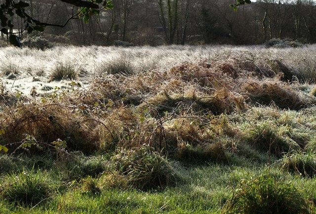 Frosty field, Widecombe