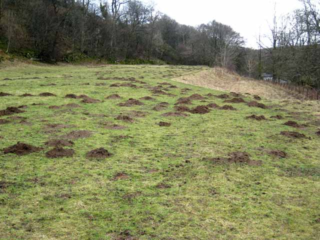 A moley field