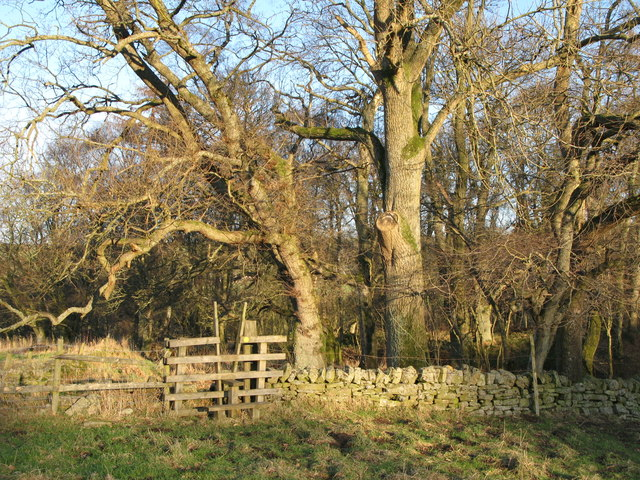 Footpath to Thornley Gate through the Faerie Glen