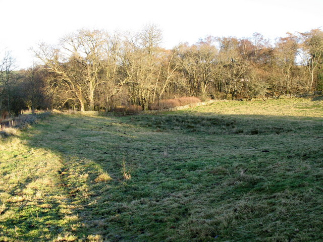 Pasture and copse above Thornley Gate