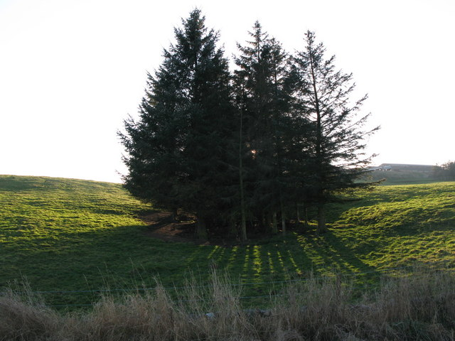 Pasture and plantation near Thornley Gate