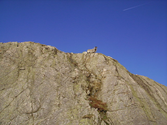 Sheep, Mere Crag