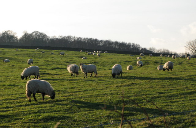 Pastures near Thornley Gate (2)