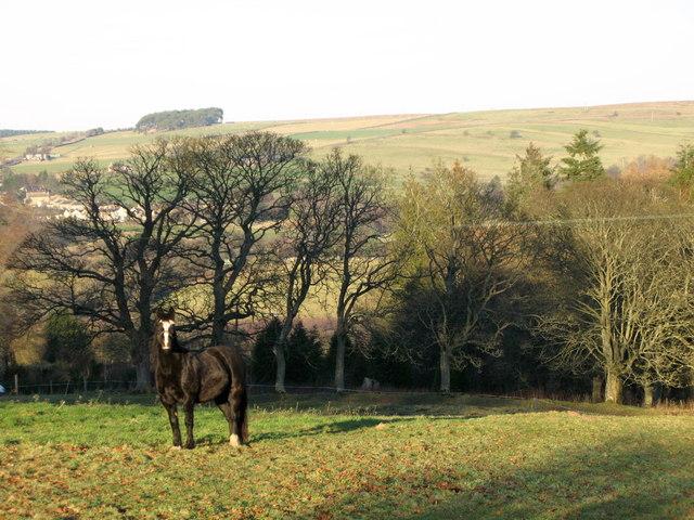 Grazing land near Bishop Field