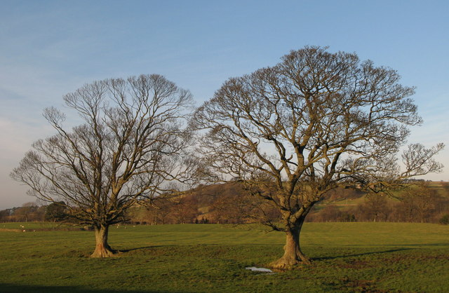Trees in pasture near Pia Troon