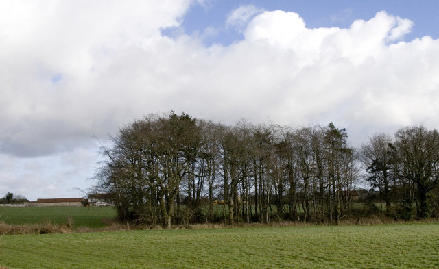 Roundham,  copse South of Travellers' Rest Inn