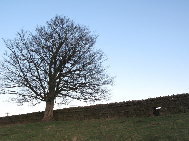 Sheephole in wall above Allendale Town