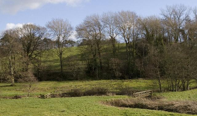 River Parrett and Broom Croft Copse.